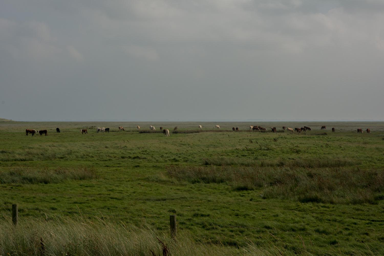 119-koeien