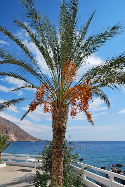 179. Palm