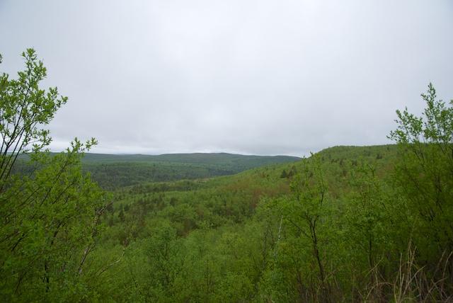 323. Landschap