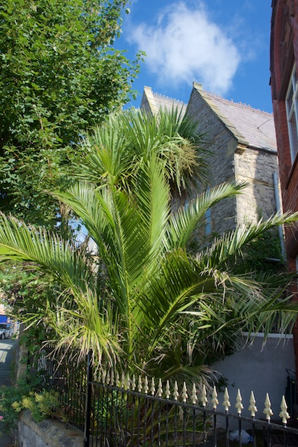 396. Palm