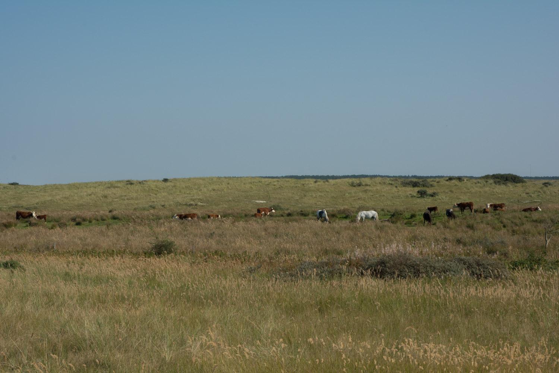 81-prairie