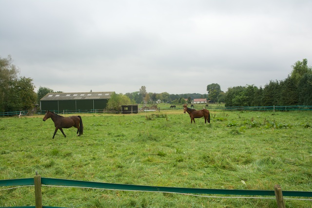 9. Paarden