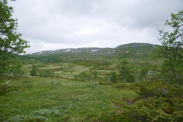 907. Hardangervidda