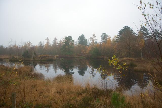 115. Natuurgebied